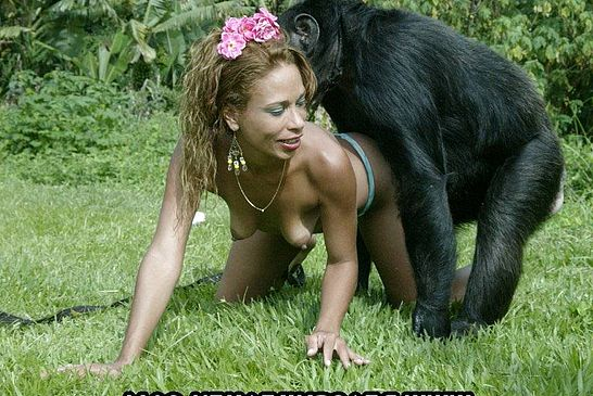 chimpanzee with girl sex